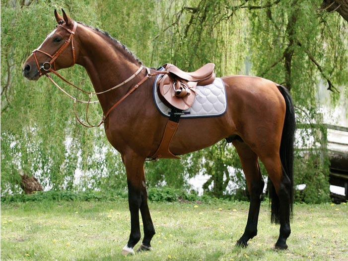 Cheval équipement équitation Stubben